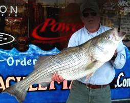 Shop Lake Havasu Fishing -  Striped Bass